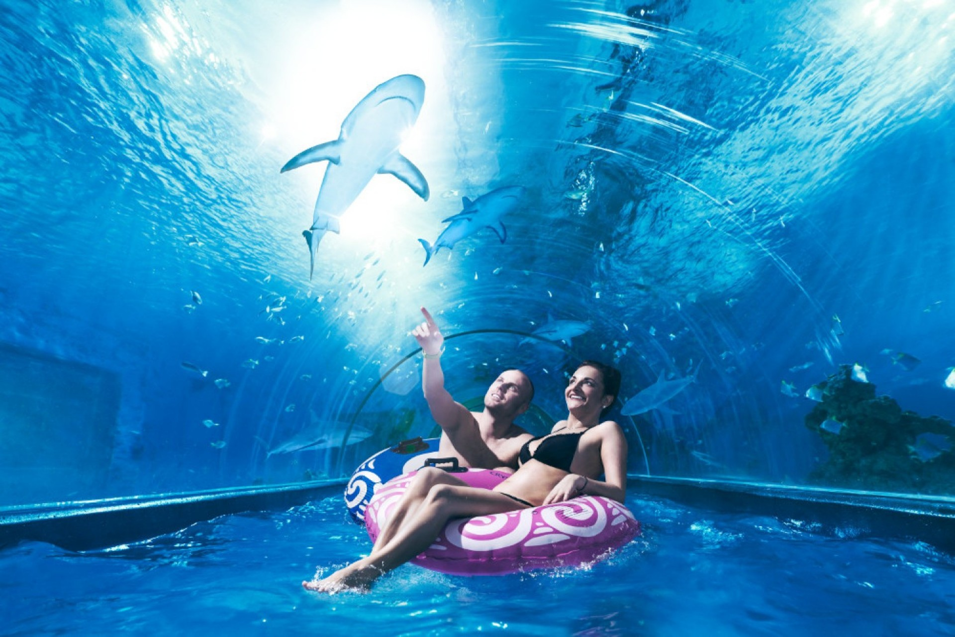 Rekiny nad Bałtykiem, czyli Shark Slide i inne atrakcje w AquaPark Reda.